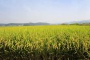 여주시, 명품 여주쌀! 벼 재배 전체 면적 GAP인증 추진